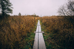 Wooden path through reeds Stock Images