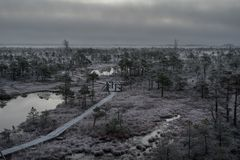 Wooden path, road in bog on early winter morning with frozen trees stock photos