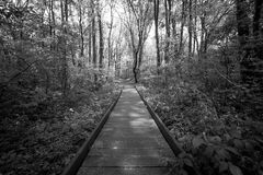 A wooden path runs through the forest. Black and white Stock Images