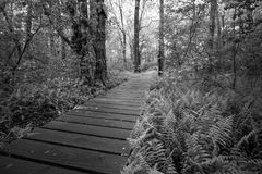 A wooden path runs through the forest. Black and white Royalty Free Stock Image