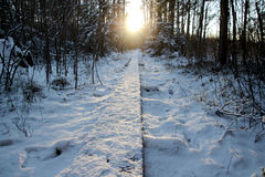 Wooden path through snowy forrest. Before the sunset. Cold winter Royalty Free Stock Photos