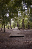 Wooden Path Start, Forest with Marshy Ground Stock Photo