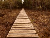Wooden path stretching through swampland Stock Photography