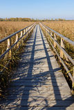 Wooden Path through the Swamp Stock Photos
