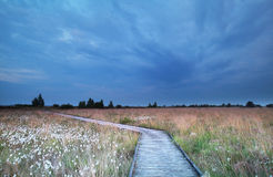 Wooden path on swamp with cotton-grass Royalty Free Stock Image