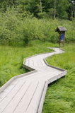Wooden path in swamp  Stock Photos