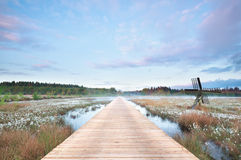 Wooden path on swamp at misty sunrise Royalty Free Stock Image