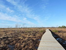 Wooden path in swamp. New wooden path in swamp and beautiful cloudy sky, Lithuania Royalty Free Stock Images