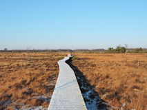 Wooden path in swamp Stock Images