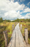 Wooden path on swamp in summer. Dwingelderveld, Netherlands Stock Photography