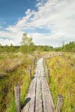 Wooden path on swamp in summer. Wavy wooden path on swamp in summer Stock Photography