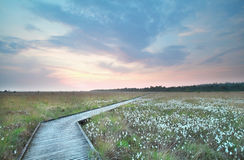 Wooden path on swamp at sundown Royalty Free Stock Photos