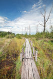 Wooden path on the swamp. During sunny day Royalty Free Stock Photos