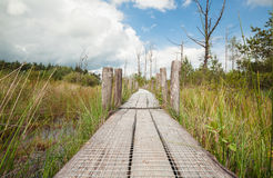 Wooden path on swamp in sunny day. Dwingelderveld, Netherlands Stock Images