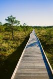 Wooden path on a swamp. Wooden path on a Viru swamp in Estonia Stock Photo