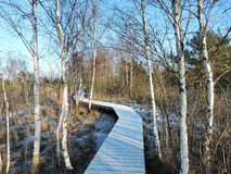 Wooden path in swamp in winter Stock Images