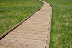 Wooden path in swamp Royalty Free Stock Photography