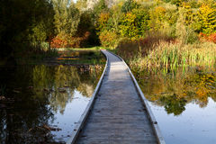 Wooden path throung the swamp Royalty Free Stock Image