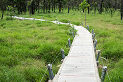 Wooden Path to The Field Royalty Free Stock Image