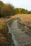 Wooden path to marsh Stock Image
