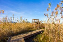 Wooden path and tower in a bird observatory, in the wetlands natural park La Marjal in Pego and Oliva. Spain stock image