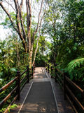 Wooden path in tropical forest Royalty Free Stock Photography