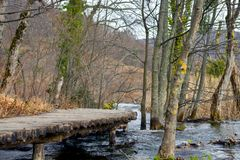 Wooden path trough the lakes Stock Photography