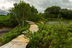 Wooden path in the Uzon Caldera. Kronotsky Nature Reserve Stock Photography