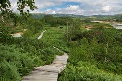 Wooden path in the Uzon Caldera. Kronotsky Nature Reserve Stock Image