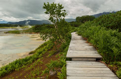 Wooden path in the Uzon Caldera. Kronotsky Nature Reserve Royalty Free Stock Photos