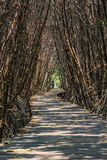 Wooden path walk to tropical forest stock photography
