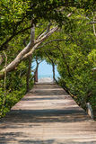 Wooden path walk to tropical forest royalty free stock image