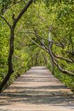 Wooden path walk to tropical forest stock images