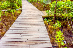 Wooden path for walking. Old wooden path for walking in the garden - Vintage Filter stock photos
