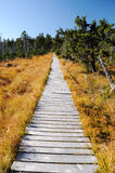 Wooden path walkway, Czech Republic Stock Photography