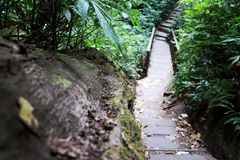Wooden path, way, track from planks in forest park, perspective image background stock images