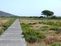 Wooden path through wetland near Stagno Longu di Posada Stock Photography