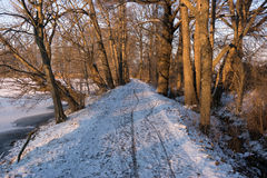 Wooden path in winter forest Royalty Free Stock Photos