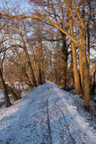 Wooden path in winter forest Stock Photo