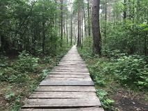 Wooden path in wood. Trees summer Royalty Free Stock Images