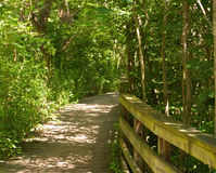A wooden path in the woods Royalty Free Stock Photos
