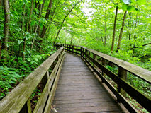 Wooden Path Through the Woods Royalty Free Stock Photography