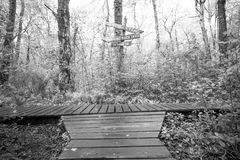 Wooden paths intersect in the forest. Black and white Royalty Free Stock Images