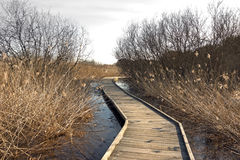 Wooden pathway Royalty Free Stock Images