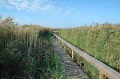 Wooden pathway Stock Image