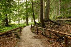 Wooden pathway at Arber Lake (Großer Arbersee) Royalty Free Stock Photos