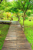 Wooden pathway. In beautiful garden resort Royalty Free Stock Images