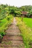 Wooden pathway. In beautiful rice field resort Royalty Free Stock Images