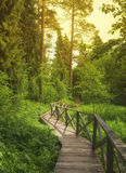 Wooden pathway Royalty Free Stock Image