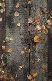 Wooden pathway with dry autumn leaves background Royalty Free Stock Image